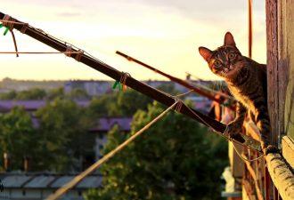 Balkon katzensicher ohne Netz
