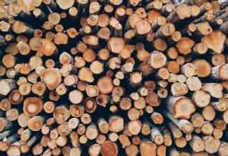 Brennholz kostenlos erhalten