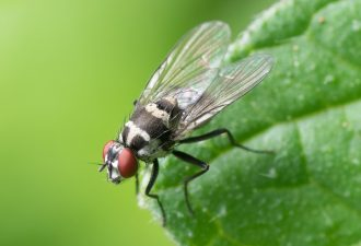 Fliegenfalle für draußen