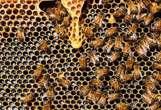 Bienenstockheizung