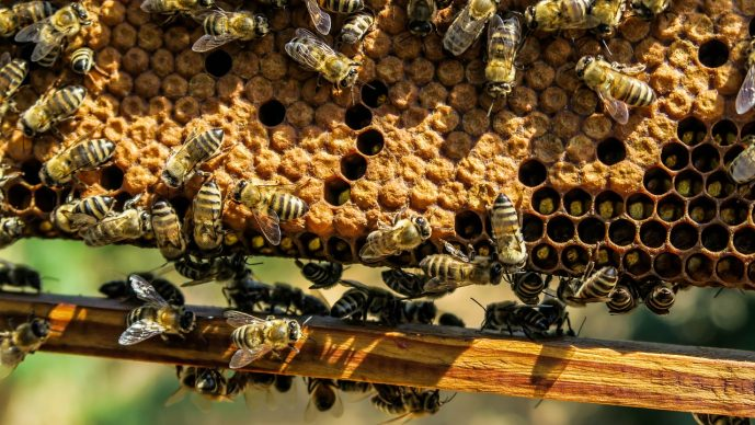 Refraktometer Honig