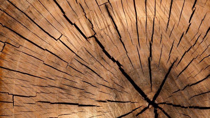 Holzspalter entlüften – So geht's
