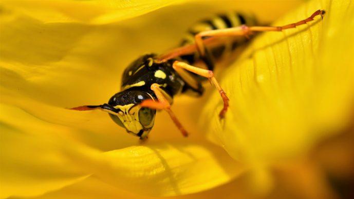 Mittel gegen Wespen im Rolladenkasten