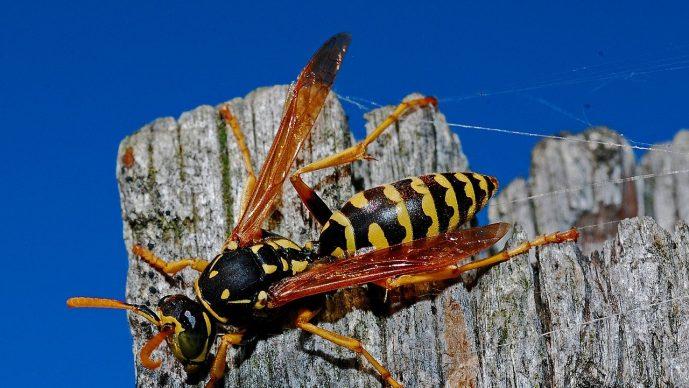 Wespenfalle elektrisch