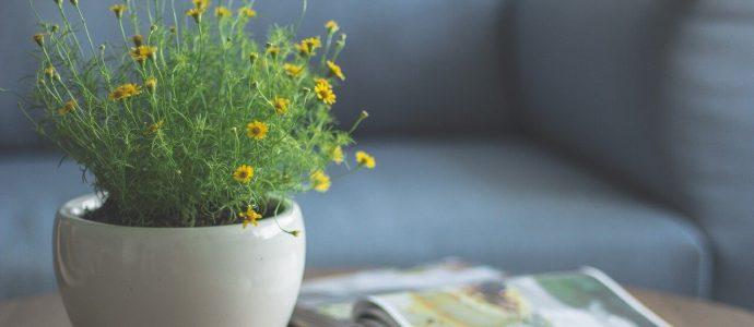 Blumentopf für innen auf einem Couchtisch